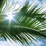 sun-beam-through-palm-leaves